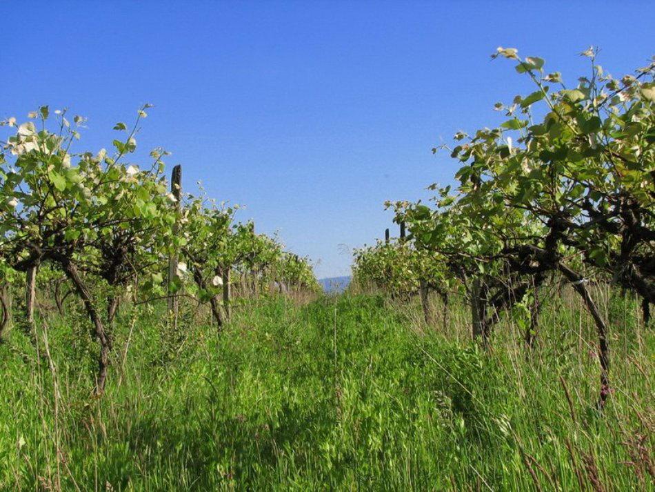 красоты-виноградова-теплица-2016