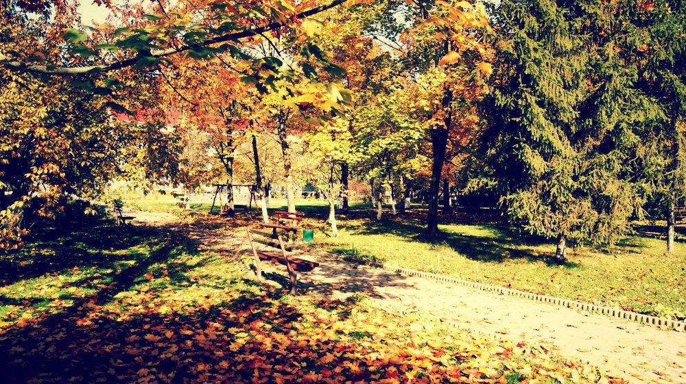 осень в теплице 2017